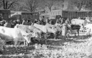 1 vue  - Marché aux bestiaux (ouvre la visionneuse)
