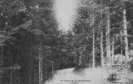 1 vue  - les sapins du Grand Colombier (ouvre la visionneuse)