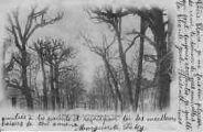 1 vue  - La Promenade des Tilleuls (ouvre la visionneuse)