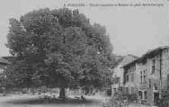 1 vue  - tilleul séculaire et maison du petit Saint-Georges (ouvre la visionneuse)