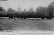 1 vue  - abbaye cistercienne de Notre-Dame-des-Dombes - gare et poste - les vaches au champ (ouvre la visionneuse)