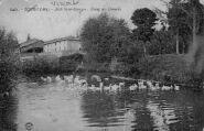 1 vue  - asile saint-Georges - étang des canards (ouvre la visionneuse)