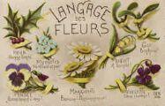 1 vue  - Langage des fleurs (ouvre la visionneuse)