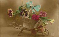 1 vue  - brouette de fleurs (ouvre la visionneuse)